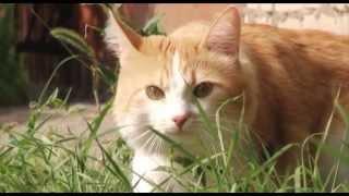 Онкологические заболевания у животных