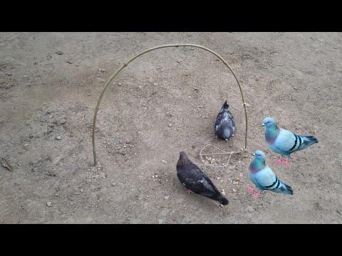 Creative Easy Bird Trap Technology That Work 100% | Build Bird Trap Make From Bamboo Stick |Work100%