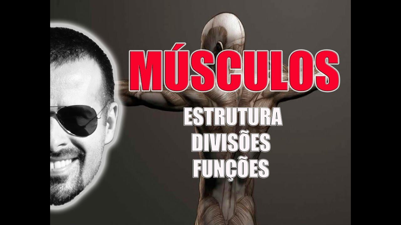 Sistema Muscular: Estrutura, divisões e funções dos músculos ...