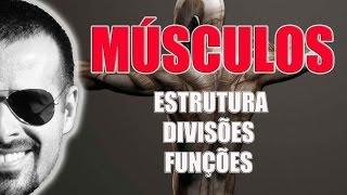 Da músculo axial coxa do anatomia