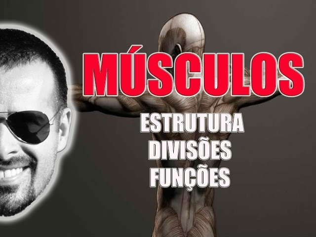 Sistema Muscular: Estrutura, divisões e funções dos músculos esqueléticos - VídeoAula 021