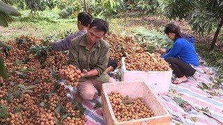 Huyện Sơn Dương, tỉnh Tuyên Quang hướng đến phát triển nông nghiệp hàng hóa tập trung