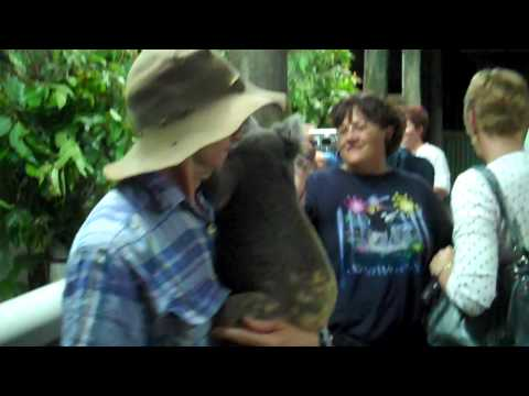 Petting The Koalas At The Night Zoo In Cairns