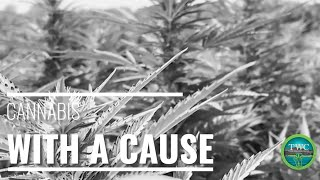 Cannabis with a Cause: Farmer and the Felon