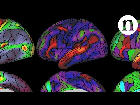 Researchers just doubled what we know about the map of the human brain