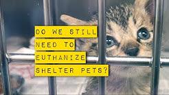 Do we still need to euthanize shelter animals?