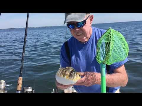 Long Beach Island Fishing Report 7 23 19
