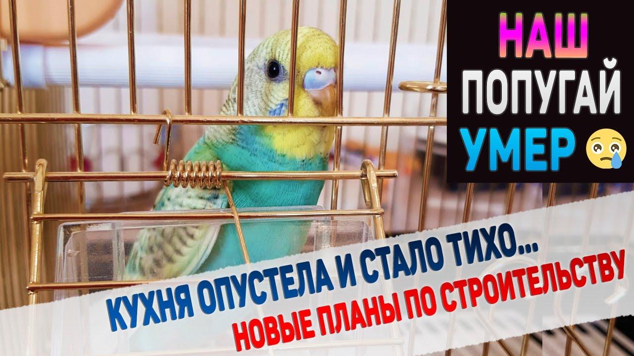 Наш любимый попугайчик умер за несколько часов😥 ШОК 😭