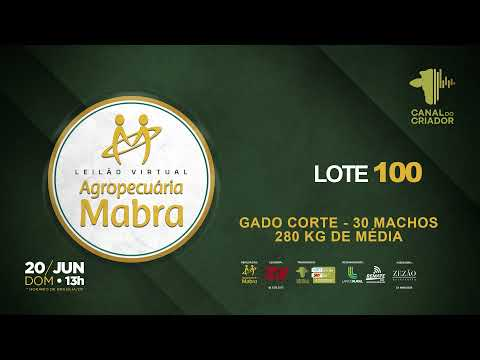 LOTE 100 CORTE   MACHOS 30  280KG MEDIA