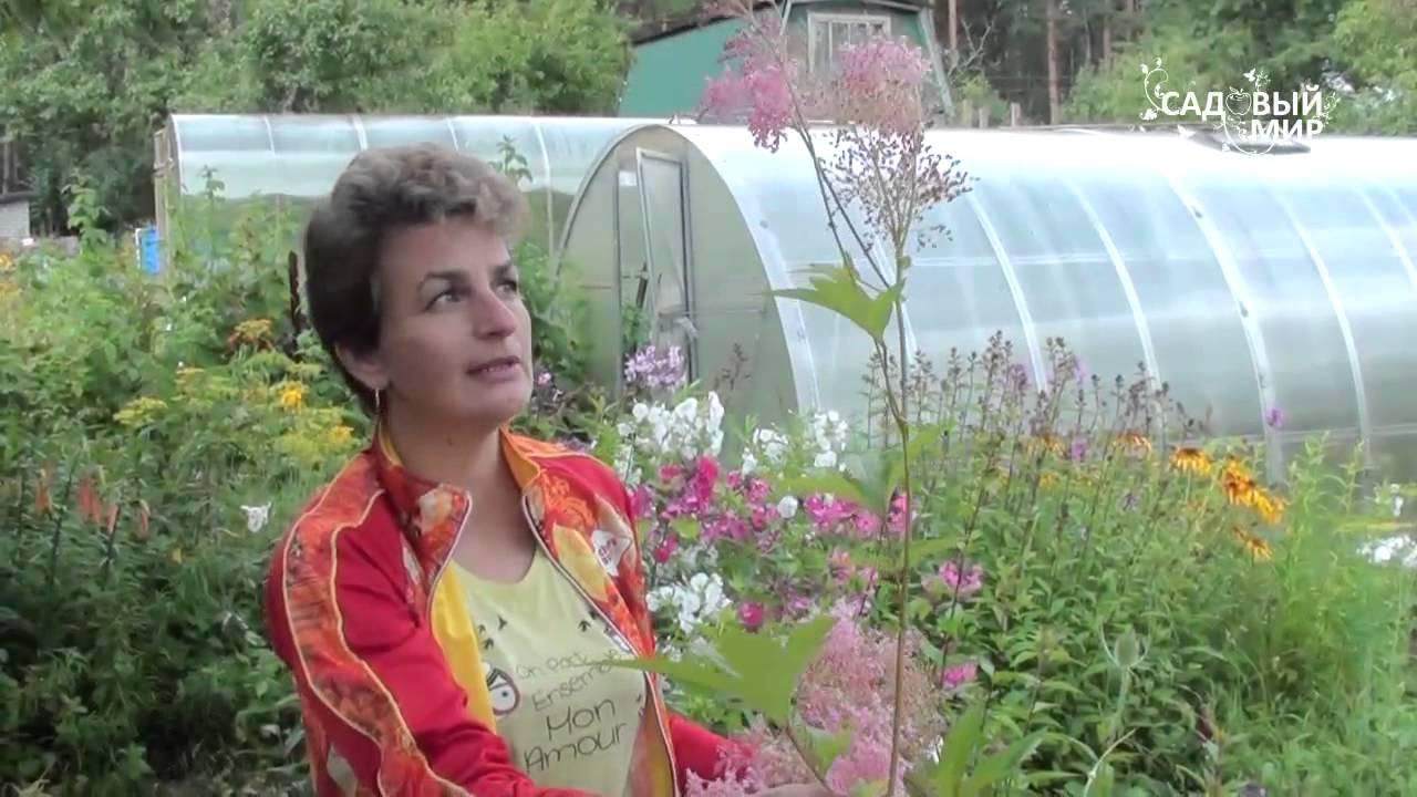 цветок лабазник