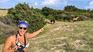 WILD HORSES AT THE BEACH!!!