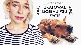 Mój Pies Zjadł Kawałek Kubka i TO URATOWAŁO MU ŻYCIE / Pan Lis