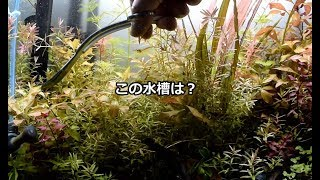 佗び草水槽をこの際リセットすることにしました 水槽は45cm水槽(高さ45...