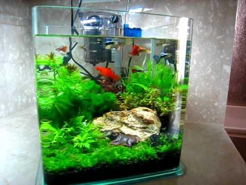 我的小魚缸 有魚有蝦有水草 還有牛! Youtube