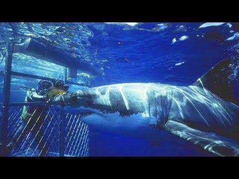 鯊魚攻擊潛水員(不安畫面,敬請注意)