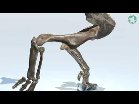 Dinosaur-Walk Study Using 3D Imaging