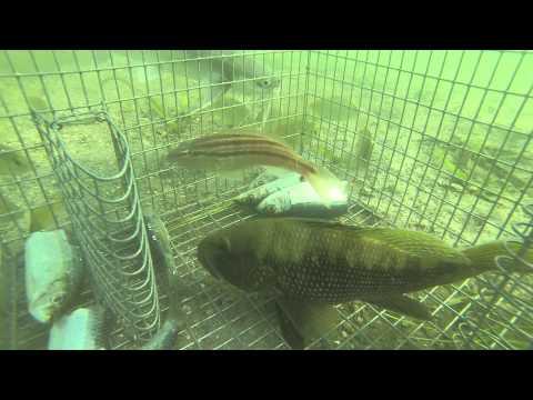 GoPro in bait