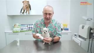 Vídeo: Protector Solar para gatos 50ml