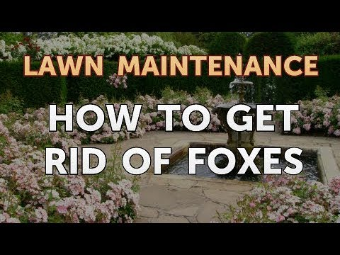 How to Get Rid of Foxes. Garden & Lawn