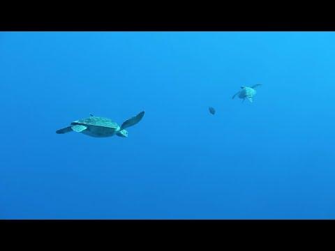 GO ON THIS CRUISE - Tahiti