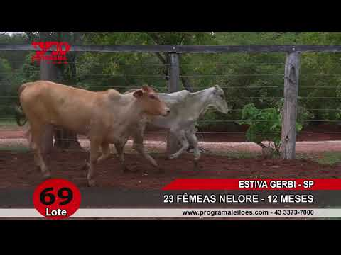 LOTE 069