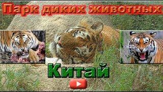 Парк диких животных.  Сафари в Китае.