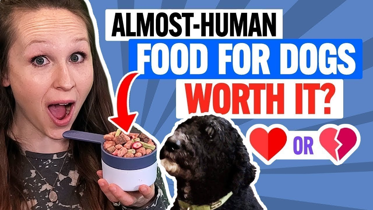 Download Spot and Tango Review: Human-Grade Unkibble Dog Food Any Good? (Taste Test)
