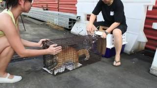 Follow the Cat Trapping Team as they tackle outlying areas in Singapore! thumbnail