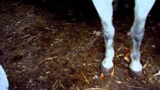 Etat Amelette ( maltraitance chevaux 95 Herblay en cours )