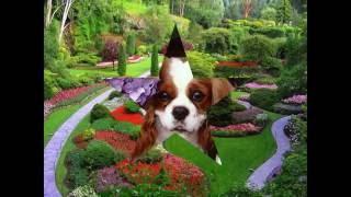 Картинки природа и животные(Это видео создано в редакторе слайд-шоу YouTube: http://www.youtube.com/upload., 2016-08-27T16:28:32.000Z)
