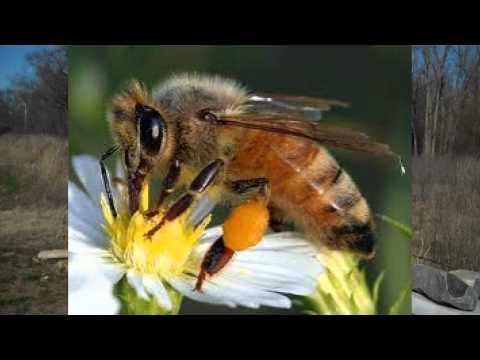 Bee Pollen Bee Pollen Granules How To Take