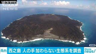 """西之島""""手つかず""""の生態系 調査へ出発(19/09/01)"""