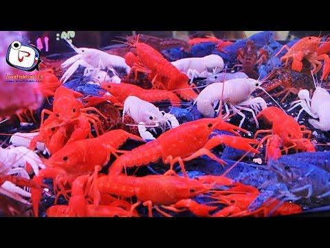 """Love Animal EP.11 """" กุ้งเครฟิช """"  Crayfish"""