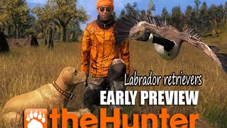 Thehunter Labrador Retriever Early Preview 2015