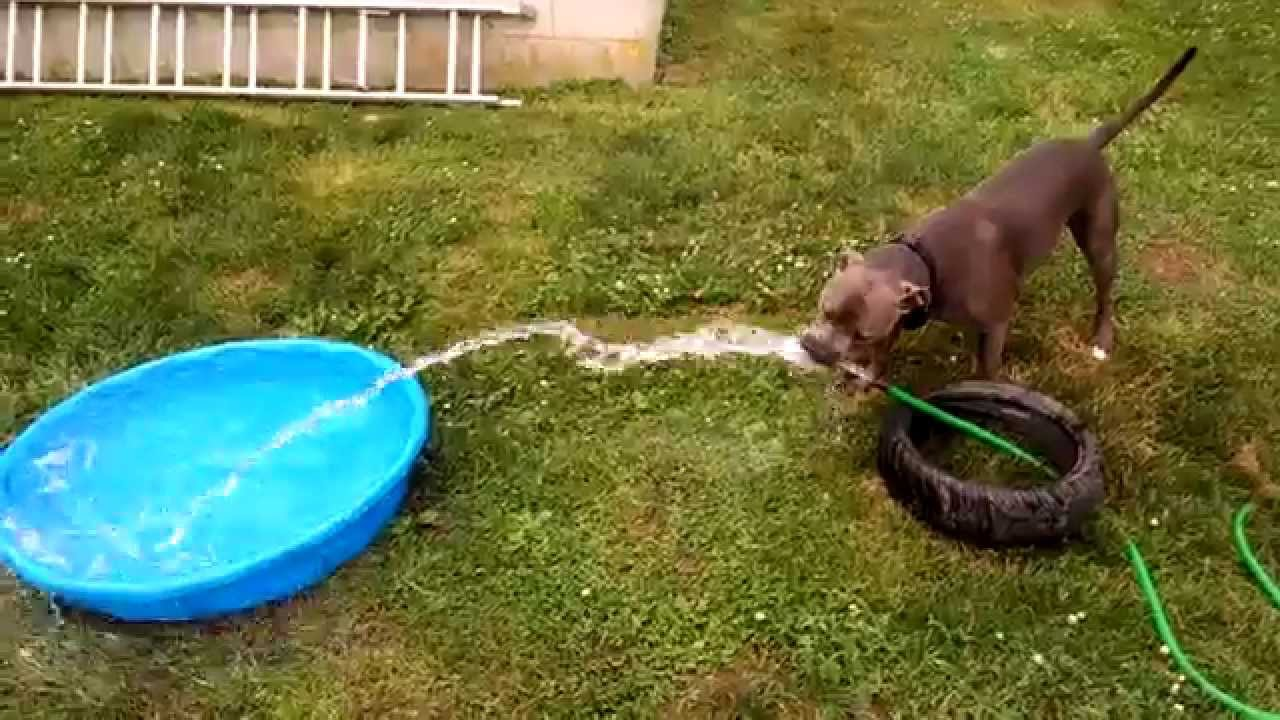 Diy How To Easy Dog Fountain Free