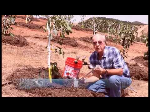 How to Install a Tensiometer in an Avocado Grove