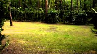 Gratis vakantie in de (Belgisch) Limburgse bossen