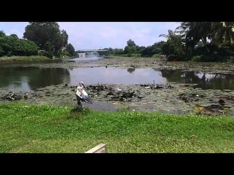 bird meditation urban wetland park ,srilanka