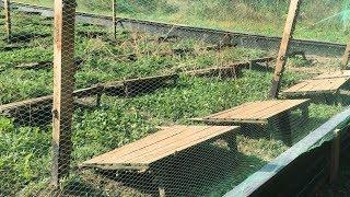 Выращивание улиток   нужен ли осушитель воздуха в таком процессе