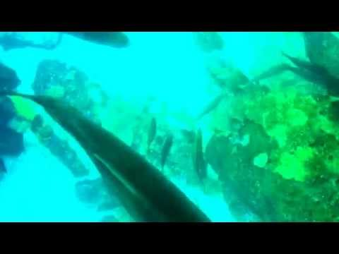 Aquarium at Dubai Mall through glass bottom boat - sharks, stingrays, fish, coral