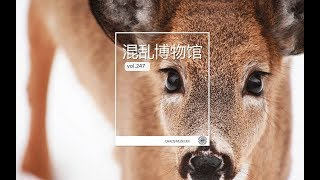 食草動物才不是吃素的丨Herbivores are not vegetarian |Chaos Museum