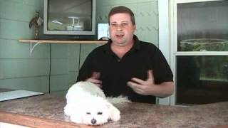 Dog Training Business - Little Known Marketing Secret For Dog Trainers