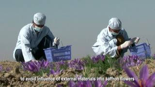 Saffron Processing and Educational Film