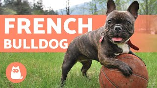 The FRENCH BULLDOG - Training and Care