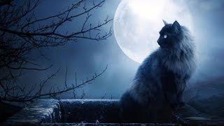 Самый опасный КОТ в мире - My most dangerous cat in the world