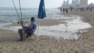 У моря: цапля - попрошайка! Израиль.