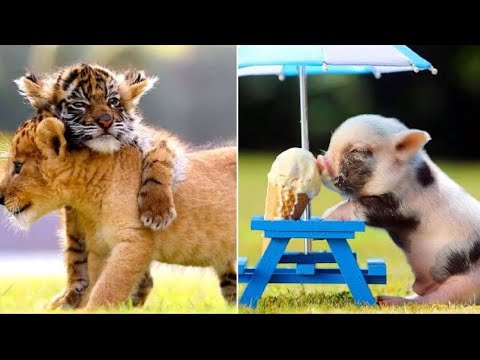 Cute Baby Animals ❤️ Funny Cats and Dogs Compilation #25