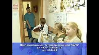 Ветеринарная клиника Барс г.Тольятти(, 2014-10-24T12:39:15.000Z)