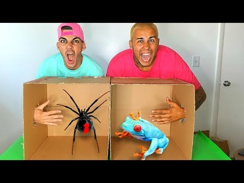 What's In The BOX Challenge!!! LIVE ANIMALS GONE WRONG