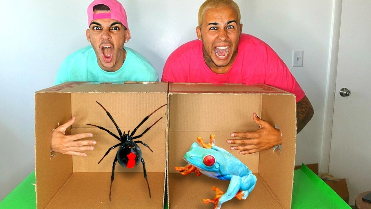 what 39 s in the box challenge live animals gone wrong youtube. Black Bedroom Furniture Sets. Home Design Ideas
